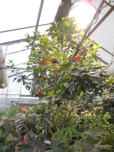 Tucson Botanical Gardens 11-3-12 with Krysti 014