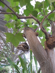 Tucson Botanical Gardens 11-3-12 with Krysti 018