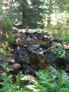 Leeann's Pond